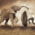 Man beschermt zich met paraplu tegen olifant