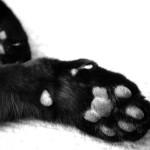 Simone ten Caat - De kat in het nauw